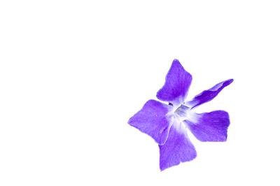 निकाली गई पृष्ठभूमि वाला फूल